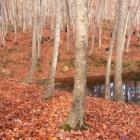 『松之山・美人林・滝見屋』の画像