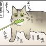 無言の猫じゃらしアピール