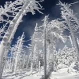 『白い森の静寂』の画像