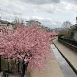 『淀の河津様を見に行ってまいりました。』の画像