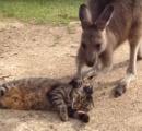 【動画】イヌやネコを撫でまくるカンガルーが海外で話題に