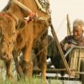 牛の鈴音 無料動画