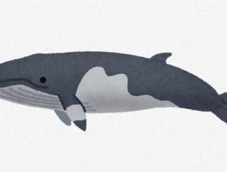 米紙「日本人のクジラ肉年間消費量は1人30グラム以下で全く興味なし。捕鯨業界は政府の補助金頼り」