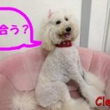 『革好きにはたまらない!「革で作る愛犬の首輪」お求めはワイズドギー射水店で』の画像