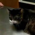 ネコを「病院」に連れてきた。診察台の横には飼い主がいる → 猫はこうなった…