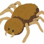 【危険】 人間の肉を腐らせ赤血球を破壊してしまう新種の毒グモを発見!!!!