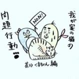『🐈我が家の猫の問題行動🐈』の画像