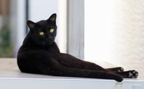 物置の上でひと休みする黒猫