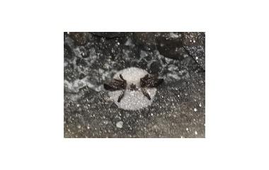 『白く眠る』の画像
