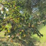 『我が家の秋の収穫祭』の画像
