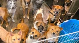 【兵庫】多頭飼育崩壊の家から犬を無断で連れ出し…救出か窃盗か、愛護団体「緊急的な救出だった」