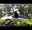 観光客とヒグマ超接近 わずか2m…車から降り写真撮影 警察が注意呼びかけ 知床半島