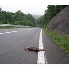 『盆の交通事故』の画像
