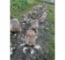 【ひぃぃ】畑にエイリアンの卵が大量発生? まさかの正体に「なんでこうなるの」