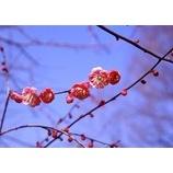 『春はもうすぐ』の画像