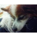 『お疲れ』の画像