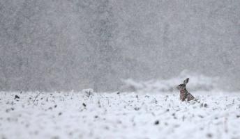 【画像】雪と動物の風景を置いていきます