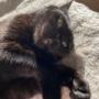 普段あまり甘えない猫の甘えている姿が撮れました