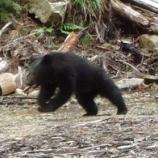 『滋賀に無断でクマ放獣して抗議された三重県 仕方ないので今回は奈良・和歌山県境寄りにクマ放獣』の画像