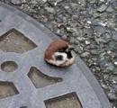 路上寝していた小鳥がかわいいと話題に 沖縄