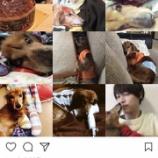 『【乃木坂46】西野七瀬の愛犬、むぎ太が亡くなった模様・・・西野兄のインスタで明らかに・・・』の画像