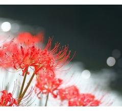 【サカナクション】「セプテンバー」歌詞の意味&解釈 秋空に思う、この世に生きる意味とは…?