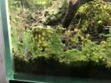 『藍藻を物理的に除去する』の画像