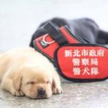 『台湾警視庁爆発物薬物チームの新メンバー』の画像