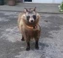 じいちゃんが山で拾ってきた犬がなんかおかしい←日本の固有種であることが判明へ