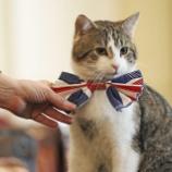 『首相官邸ネズミ捕獲長vs外務省ネズミ捕獲長官』の画像