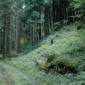 森に溶け込んでいる不法投棄のクルマたち