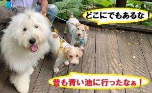 愛犬を連れて 18日目の北海道旅