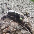 『夏の昆虫シリーズ 宇宙昆虫カブトムシ/昆虫怪獣ノコギリクワガタ』の画像