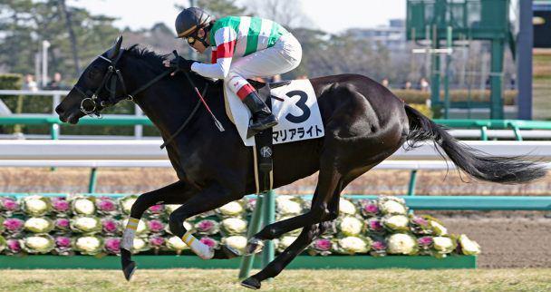 牝馬マニアの競馬予想ブログ イメージ画像