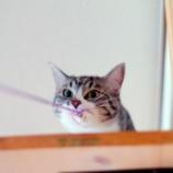 『うちの子(猫)たちのかわいいところ』の画像