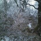 『春の山と思ったのに・・・寒ぶ~三瓶山』の画像