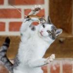 【画像】ネコがネズミを捕まえた結果www