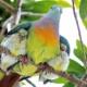 愛情たっぷり!個性を感じる鳥の子育ての瞬間が面白い「こんな場所でこんな風に」