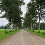 『【北海道ひとり旅】十勝の旅『十勝牧場』見応えのある白樺並木』の画像