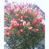 『花束を贈る』の画像