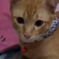 兄ネコが子猫を見守っていた。お腹が減っているのかにゃ? → やさしい猫はこうします…