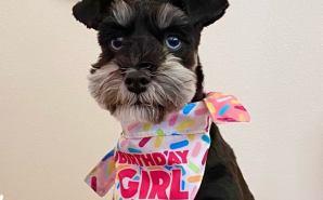 愛犬の1歳の誕生日をお祝い