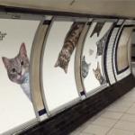 """【動画】英国、地下鉄駅の広告枠を市民団体が全部買い占め!""""猫""""の広告だらけに [海外]"""