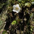 『出雲北山の花』の画像