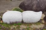 筋斗雲みたいな石がある!と近づいてみたら『隠れスター』があったよ!~JR河内磐船駅ロータリーのところ~