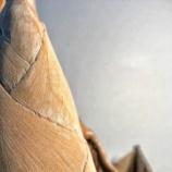 『藝術の秋:たけのこ彫り』の画像
