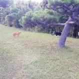 『猫探索』の画像