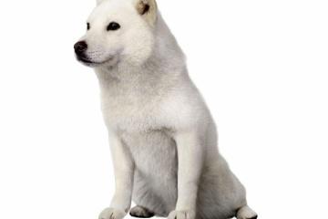 海外「ああ、お父さん・・・」ソフトバンクでおなじみの看板犬死去に悲しむ海外の人々