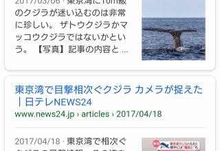 【悲報】東京湾にクジラ現る