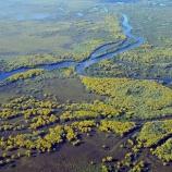 『世界最大の湿地帯の火災』の画像
